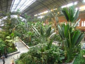 800px-Invernadero_de_Atocha,_Madrid_-_view_1