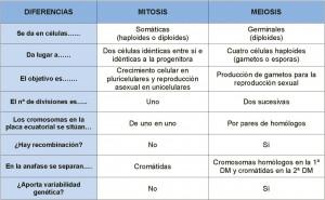 Comparacion MITOSIS-MEIOSIS